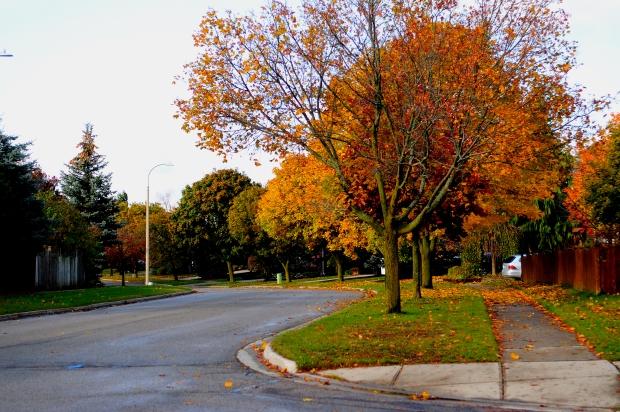 Homes For Sale Kitchener Stanley Park